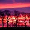 sci_roseviolet