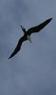 habitat_oiseaunoir